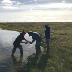 Periphyton being collected at Cake Eater Lake. Utqiaġvik, Alaska. Photo by Ruth Rodriguez.
