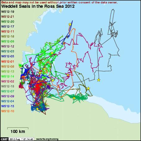 weddell seal tracking map image courtesy of seaturtleorg