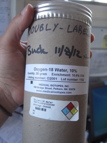 Doubly labeled water