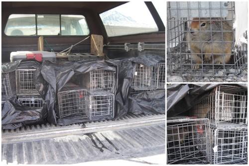 Squirrels in truck