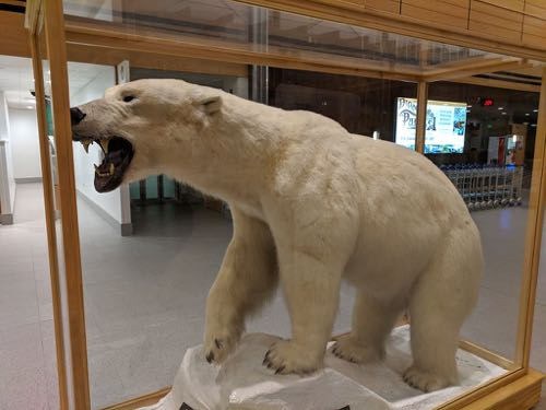 taxidermied polar bear