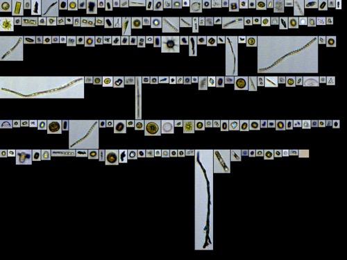 FlowCam image of Southern Ocean Diatoms 2