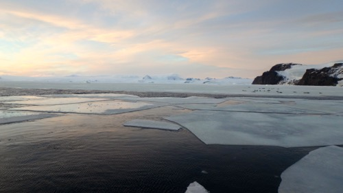 Fast ice, ice floes and seals