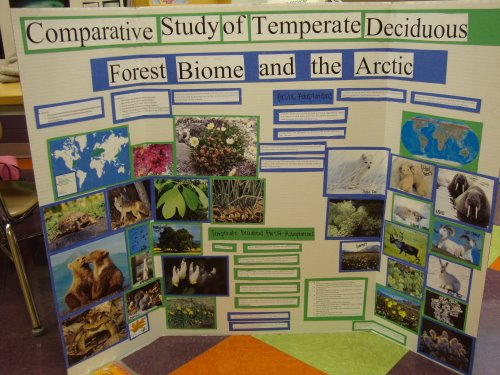 forest biome animals and plants