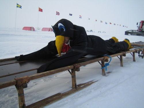 Penguin on Nanson Sled