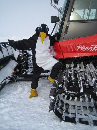Penguin on Piston Bully
