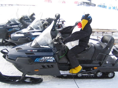 Penguin on Skidoo