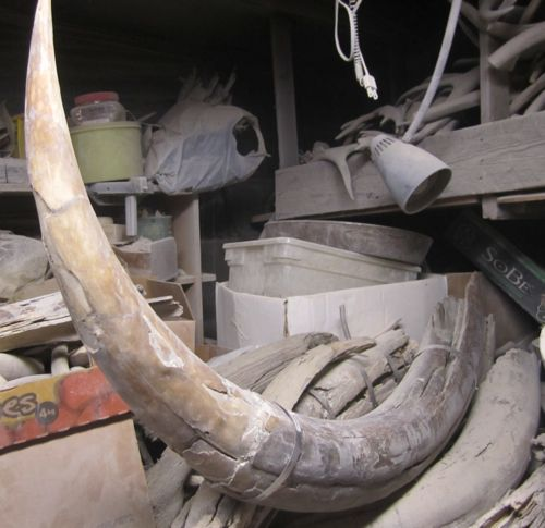 Found In Basement: 11 February 2014 Basement Of Bones