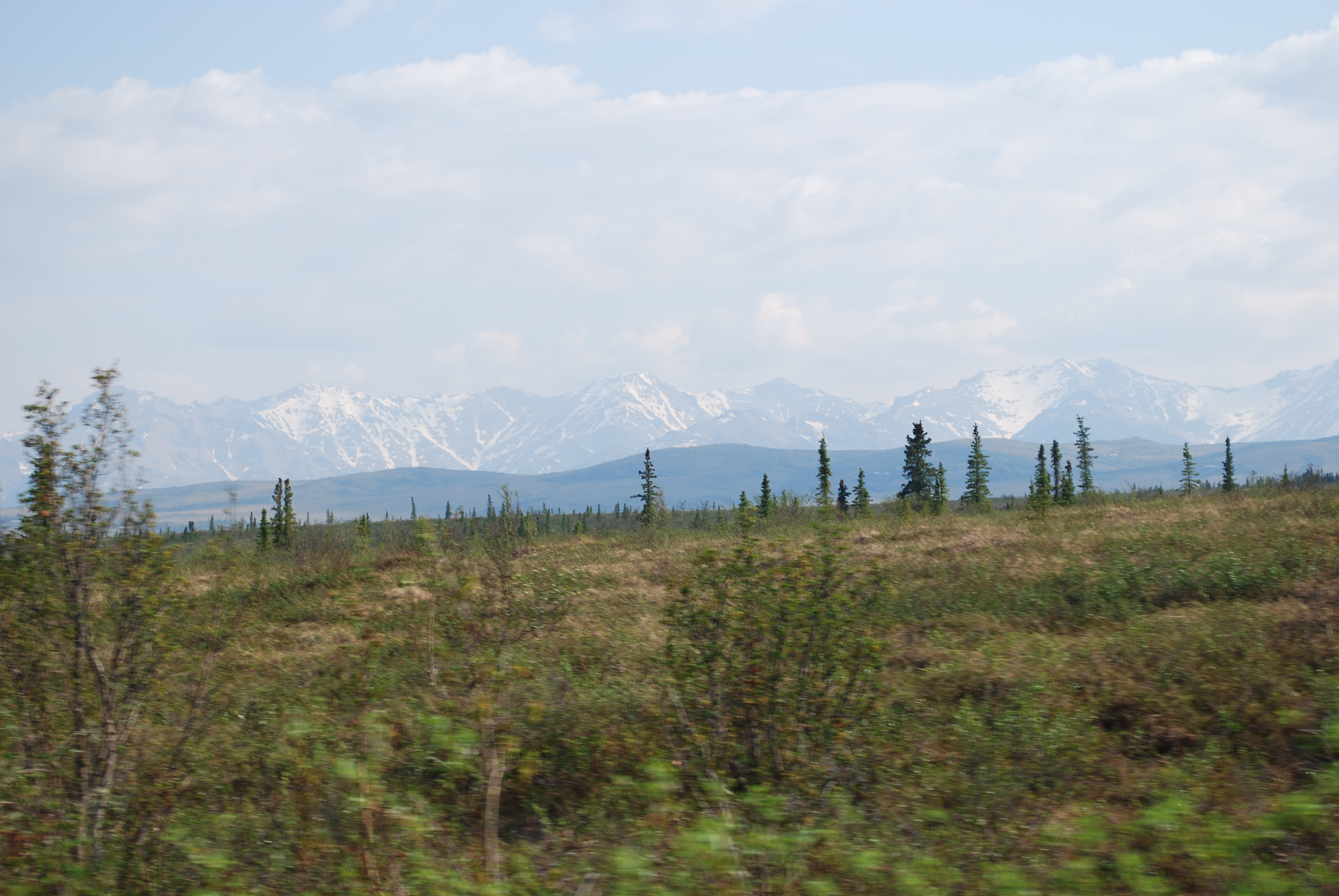 This is how the tundra looks during the early summer