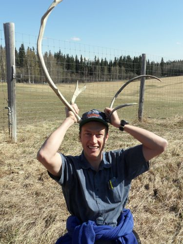 Fun with caribou antlers
