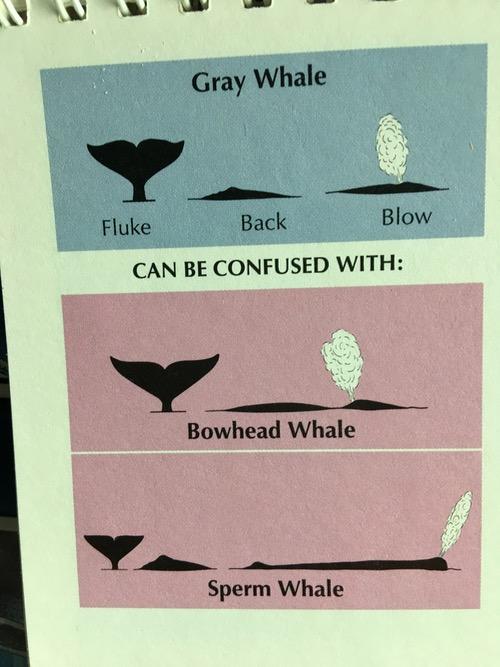 Whale tale id