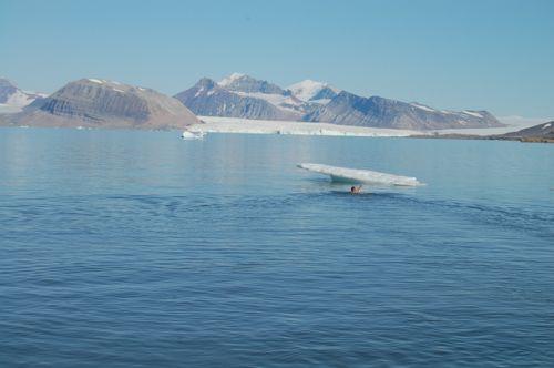 Swimming to the iceberg