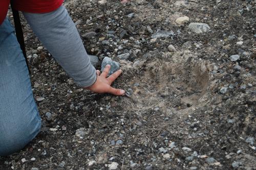 Polar Bear footprint!!