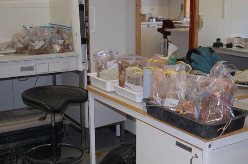 Liz's box core samples