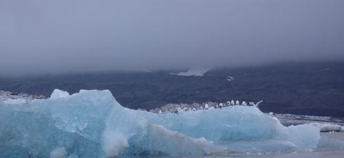 Birds resting on an iceberg.