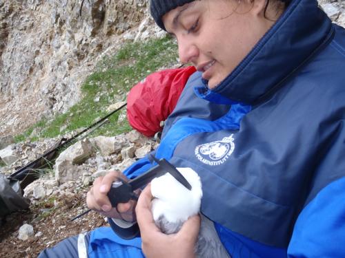 measuring the birds