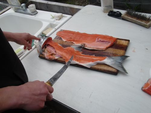 After carefully filleting the fish, the rest will be used to make dog food.