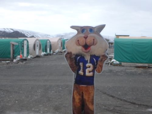 Flat Cat in Weatherport City