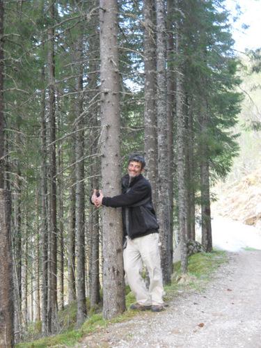 Tree Hugging in Norway