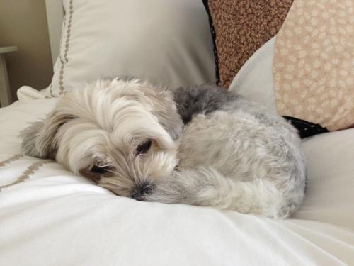 Mac sleeping