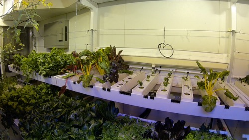 Hydroponic green house SPS