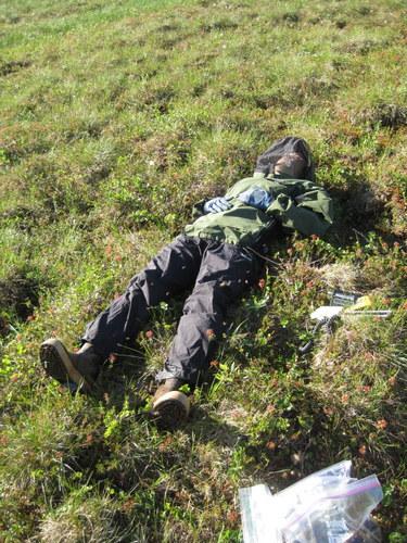 Tundra nap.