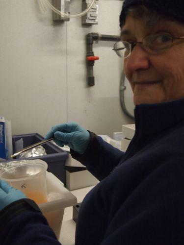 Transferring eggs into vials