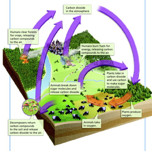 ... an idea of the ins and outs, so to speak, of the global carbon cycle