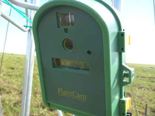 Plant cam mounted on trolley tower at Toolik Field Station June 2012