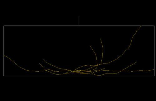 3D image Betula stem digitized by Jose Luciani