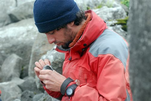 Thibaut examines an auklet