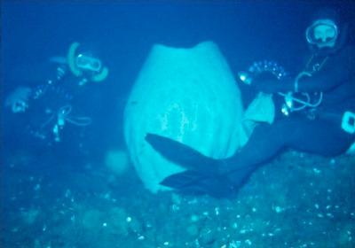 Paul Dayton, Anoxycalyx joubini, and Gordy Robilliard, diving