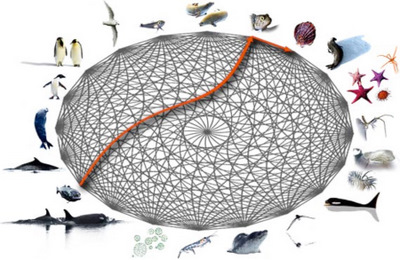 the interconnected web of Antarctic life and the recent decline of toothfish po