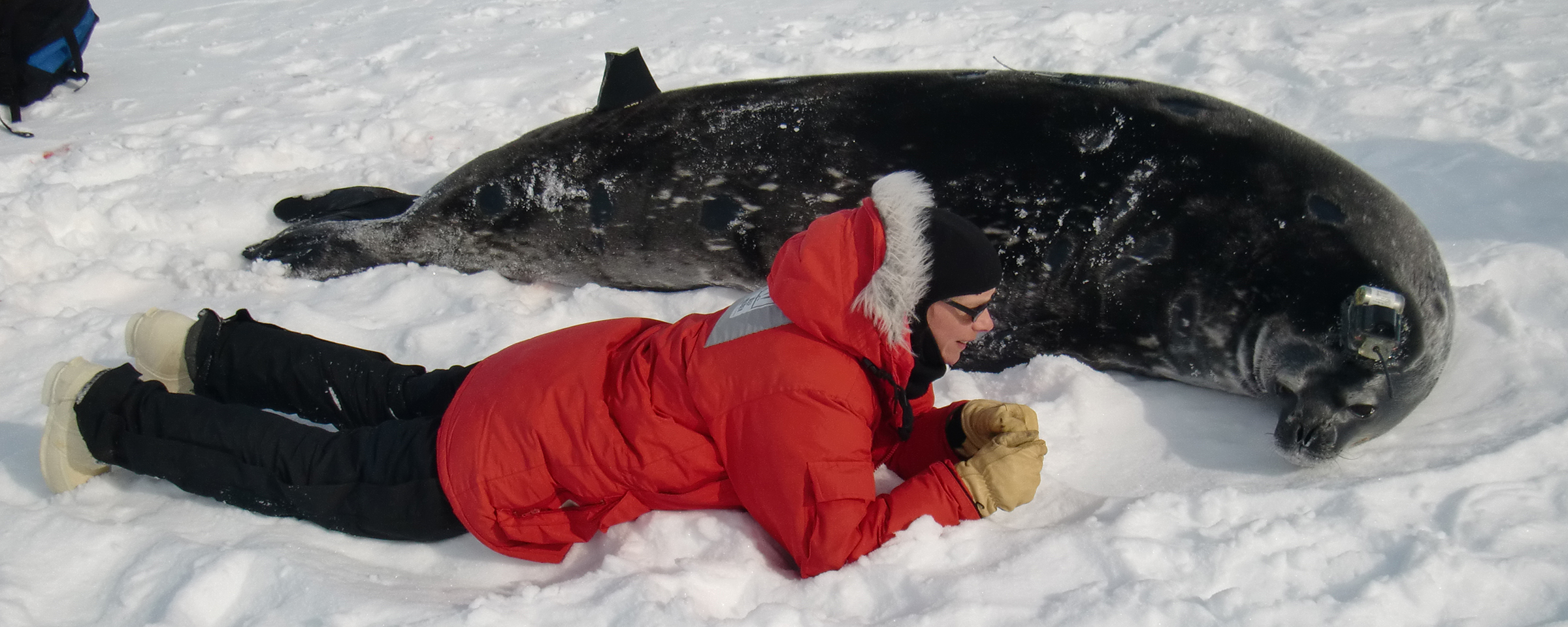 Alex and Weddell Seal