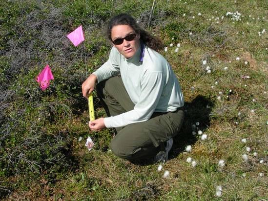 PolarTREC teacher Laurie Carr taking measurements near Toolik Lake, Alaska