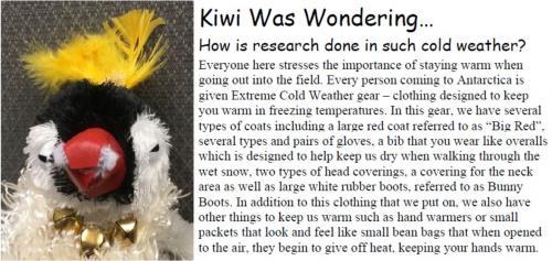 Kiwi was wondering...