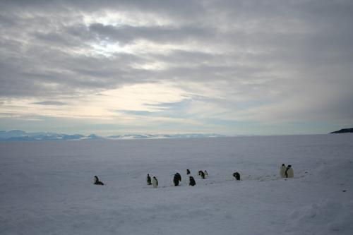 Penguins and the Royal Society Mountains