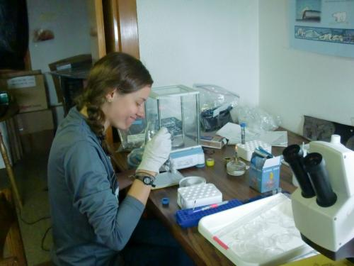 Carrie Harris separates one DNA sample into two.