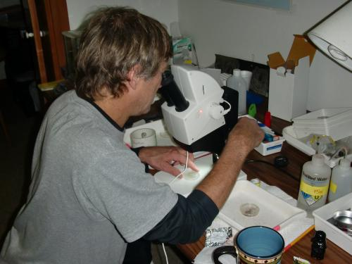 Ken takes a look at the plankton of the day.
