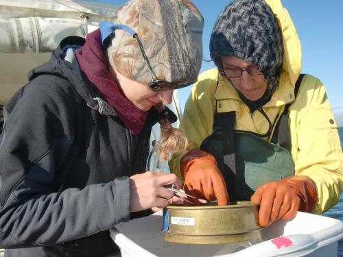 Steph and I sort through the organisms brought up in the trawl.