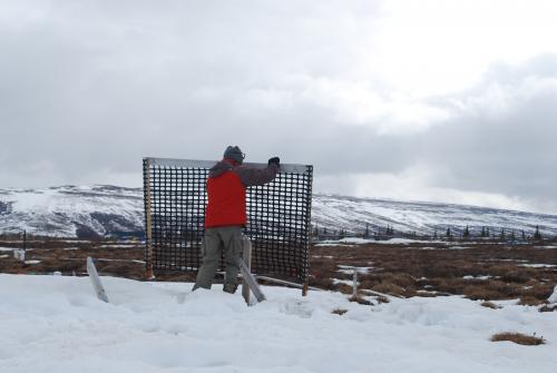 Taking down snow fences