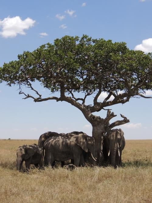 Elephants on the Serengeti