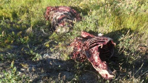 Carcasses