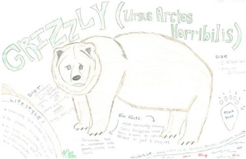 Grizzly bear species journal