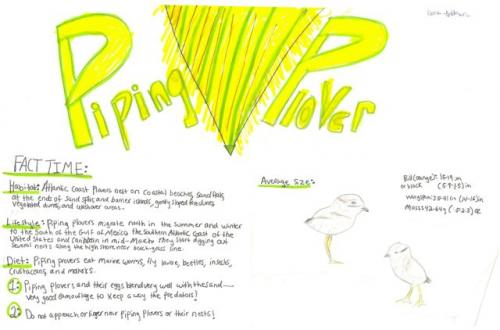 Piping plover species journal