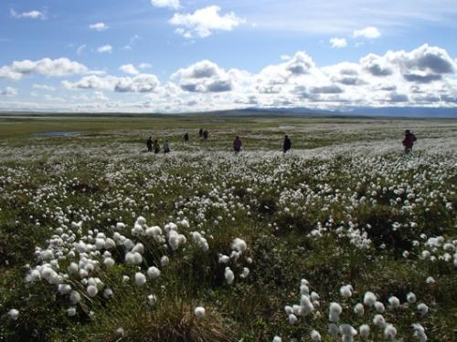 We walked across acres of cotton grass on our way down to the river.