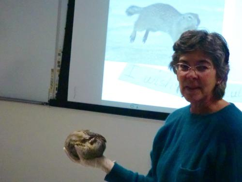 Jeanette Moore and Arctic Ground Squirrel