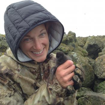 PolarTREC teacher Wendi Pillars holds a crested auklet chick at Cape Kitnik, St. Lawrence Island, Alaska