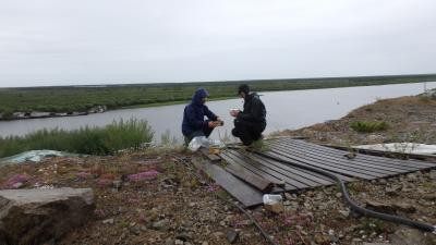 Cleaning root samples on the bank of the Pantaleha River