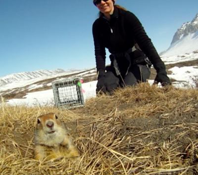 Jennifer Baldacci with a released Arctic ground squirrel. Photo by Jennifer Baldacci.